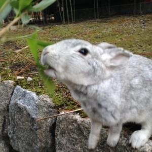 ウサギ島 20160130