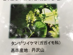 IMG_7755[1]